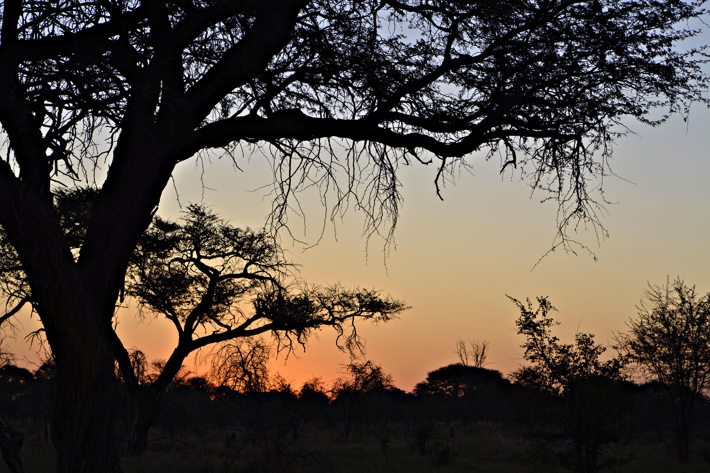 OAT AFRICA-05