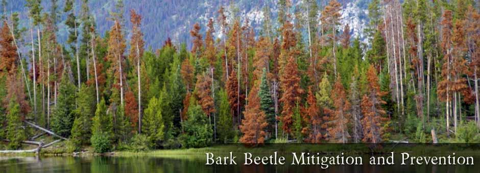 BARK BEATLE INFESTATION