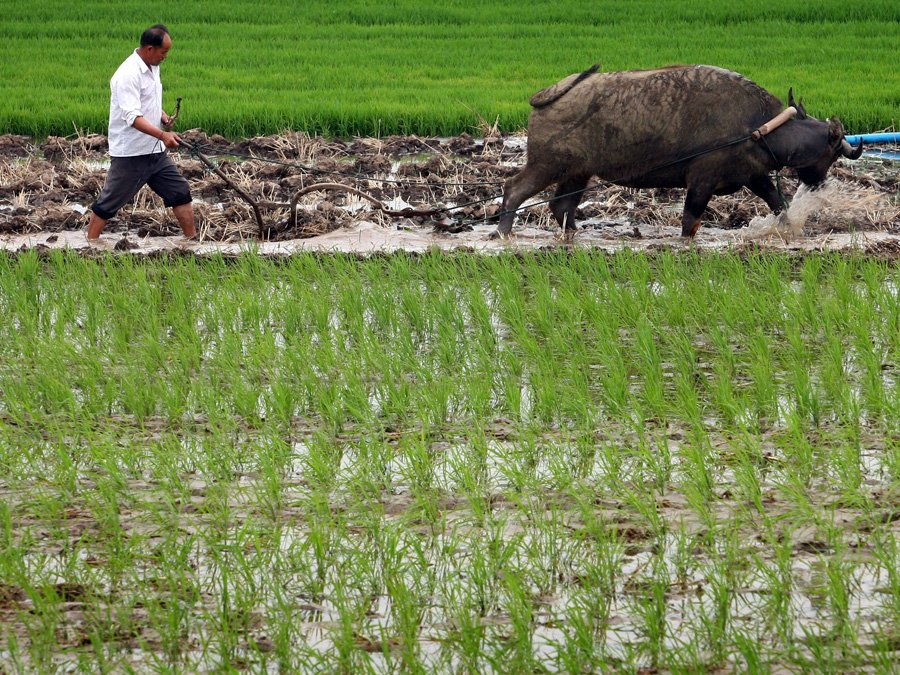 CHINA'S FARMING INDUSTRY