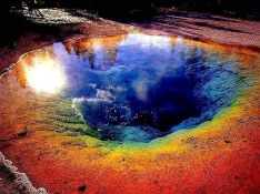 THERMOPHILE ENVIRONMENT IN THE HOT SPRINGS OF YELLOWSTONE