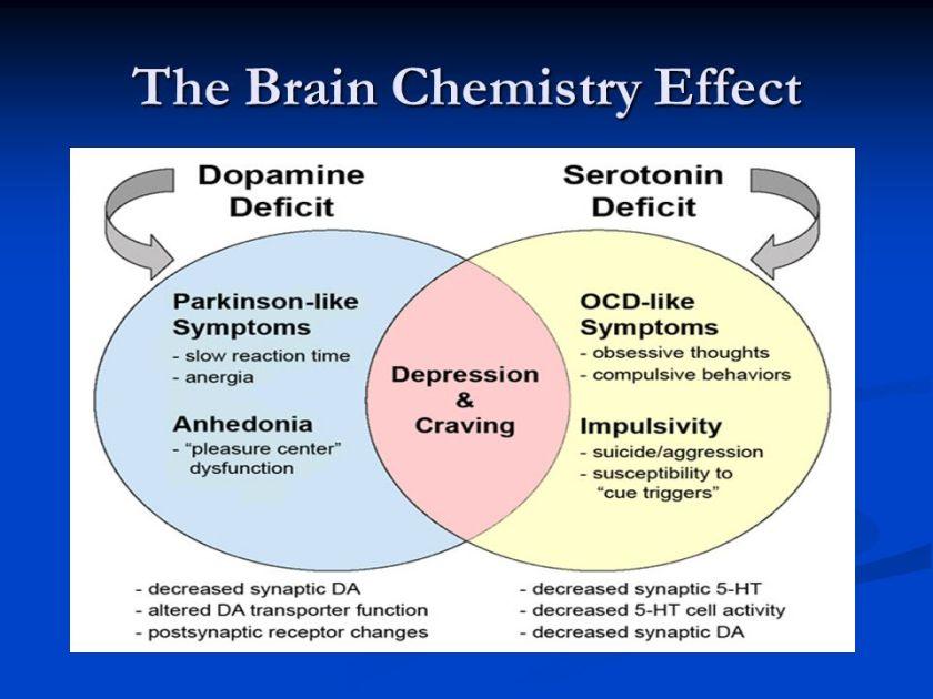 The Brain Chemistry Effect